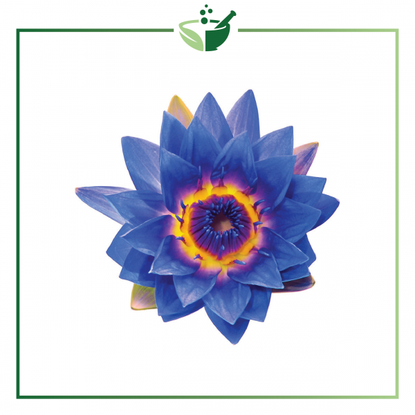 Blue Lotus Essential Oil-01