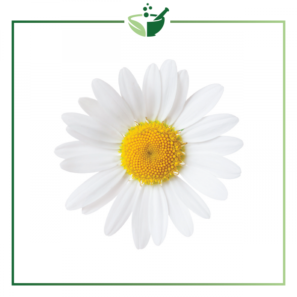 Chamomile German Essential Oil-017