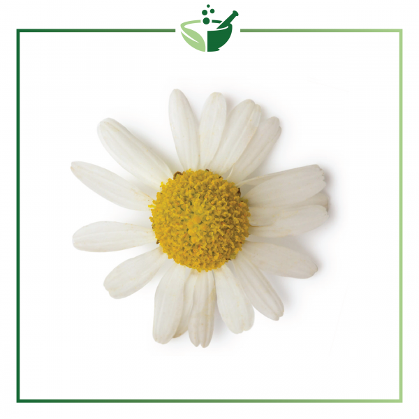 Chamomile Roman Essential Oil-01