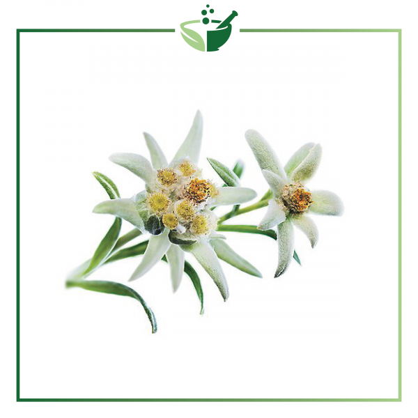 Edelweiss Extract-01