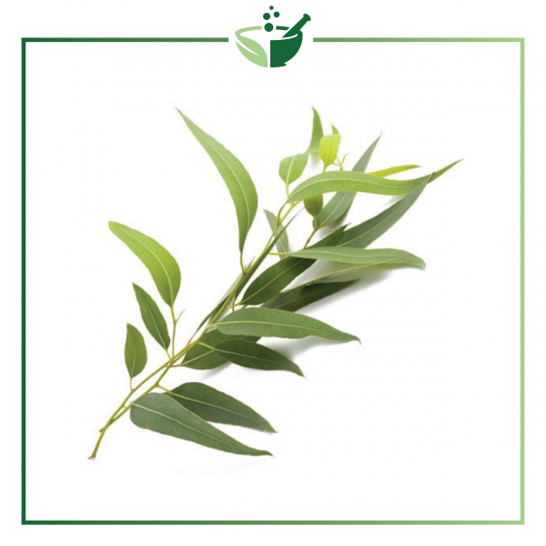 Eucalyptus Essential Oil-01