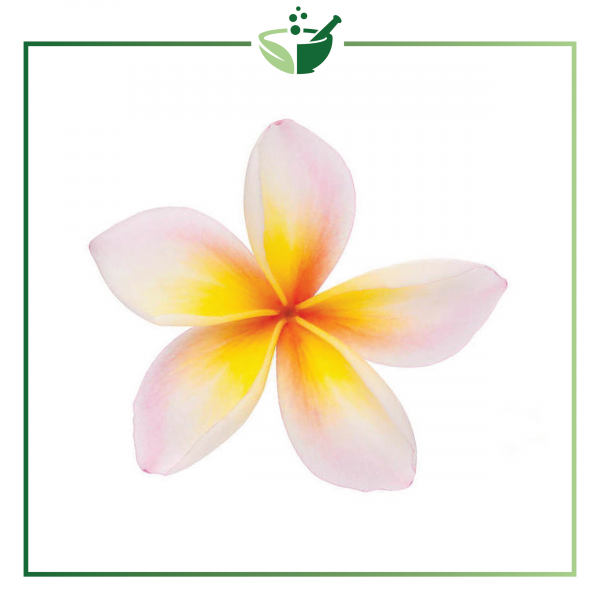 Frangipani Absolute Oil-01-01
