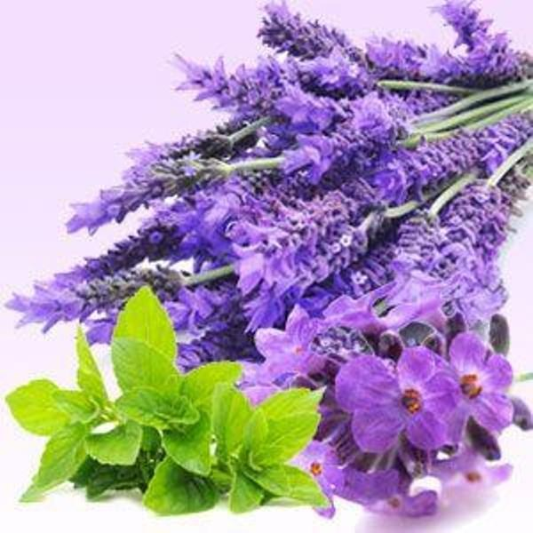 Lavender Mint WOW Fragrance Oil