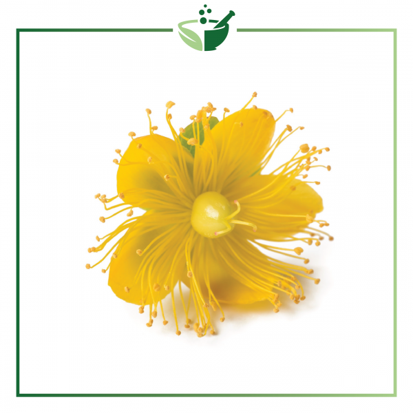 St. Johns Wort Powder-01